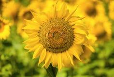 Het glimlachen van zonnebloem met trouwringen Stock Afbeelding