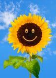 Het glimlachen van zonnebloem op blauwe hemel Stock Foto