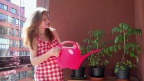 Het glimlachen van zwangere vrouwelijke meisje het water geven installaties in balkon op zonlicht stock footage