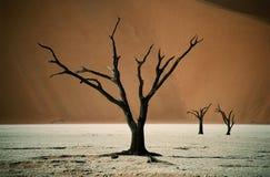 Het globale verwarmen van de droogte stock foto