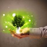 Het gloeien boom het groeien in de hand van een zakenman Royalty-vrije Stock Foto