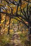 Het gloeien de herfst 7 royalty-vrije stock foto