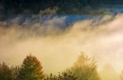 Het gloeien miststijging over het bos op helling stock foto
