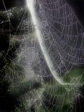 Het gloeien Web Stock Foto