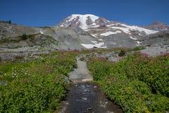 Het glorierijke voetpad die van de wildflowerslijn Regenachtiger leiden op te zetten stock foto