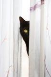 Het gluren kat Stock Afbeelding