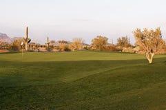 Het golfcursus van Arizona Royalty-vrije Stock Afbeeldingen