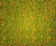Het Golfcursus van de grastextuur voor ontwerppatroon en achtergrond Stock Foto's