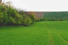 Het golvende landschap van de fairytalelente met gebieden en hemel Het landschap van de lente Moravian Toscanië, Zuid-Moravië, Ts Stock Foto