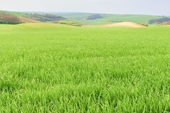 Het golvende landschap van de fairytalelente met gebieden en hemel Het landschap van de lente Moravian Toscanië, Zuid-Moravië, Ts Stock Fotografie