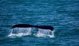 Het gordijn van het walviswater Stock Afbeeldingen
