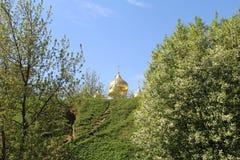 Het goud dat ik tussen bomen heb gebaad royalty-vrije stock afbeeldingen