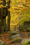 Het Goud van de herfst in Bos Stock Foto's