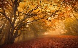 Het gouden bos van het Dalingsseizoen Stock Foto