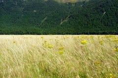 Het gouden die gras met gele ragwortbloem wordt gestrooid die in een valleiwind slingeren stelt met de donkergroene struik van Ni Stock Foto