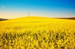 Het gouden landschap van het canolagebied Stock Foto