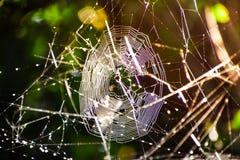 Het gouden licht van de zon glanst door spider& x27; s Web royalty-vrije stock afbeeldingen