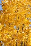 Het gouden patroon van dalings gele bladeren royalty-vrije stock afbeelding