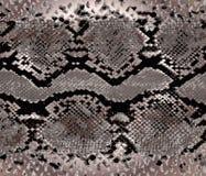Het gouden patroon van de slanghuid Textuurslang Modieuze druk Manier en modieuze achtergrond vector illustratie