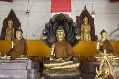 Het gouden standbeeld van Boedha van Wat Phra Mahathat Woramahawihan in Nakhon-Si Thammarat, Thailand Stock Afbeeldingen