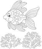 Het gouden vissen vriendschappelijke glimlachen Stock Afbeeldingen