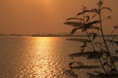 Het gouden zonlicht die de waterspiegel achter boomstruik door het meer overdenken stock foto