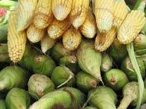 Het Graan van de maïs Stock Foto