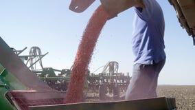 Het graan wordt gegoten in een korrelpottenbakker onder de supervisie van een landbouwer op landbouwgebied tijdens de herfstoogst stock videobeelden