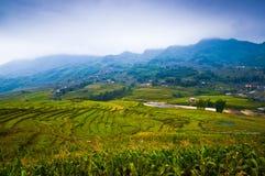 Het Graangebied van Vietnam Royalty-vrije Stock Foto's