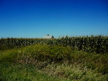 Het Graangebieden van Iowa Stock Afbeelding
