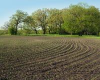 Het graanrijen van de lente Stock Afbeeldingen