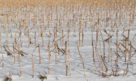 Het graanstoppelvelden van Croped Royalty-vrije Stock Afbeelding