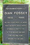 Het graf van Fossey van Dian Stock Afbeeldingen