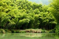 Het graf van het bamboe door de oever van het meer Royalty-vrije Stock Afbeeldingen