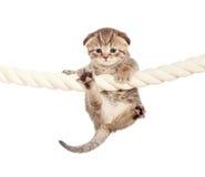 Het grappige babykat hangen op kabel royalty-vrije stock fotografie