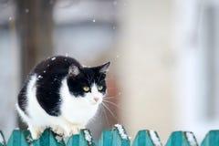 het grappige binnenlandse katje zit op een houten omheining in het dorp in de tuin tijdens een sneeuwval royalty-vrije stock foto