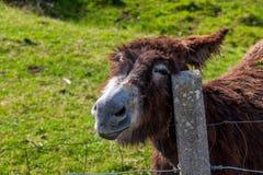 Het grappige gelukkige ezel krassen royalty-vrije stock afbeeldingen