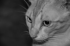 Het grappige gestreepte katje zitting en glimlachen stock afbeelding