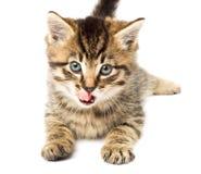 Het grappige katje isoleert in wit Stock Afbeeldingen