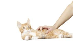 Het grappige katje kijkt op een witte achtergrond stock videobeelden