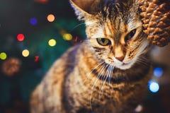 Het grappige katten thuis huis speelde met achtergrond van kegel de Mooie Kerstmis met nieuwe jaardaccor, Kerstboom met decoratie Stock Foto