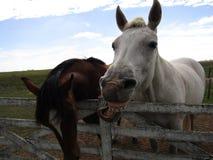 Het grappige paard lachen stock foto