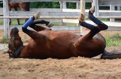 Het grappige paard rolt ondersteboven op zand Stock Foto