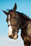 Het grappige paardhoofd glimlachen Stock Foto's