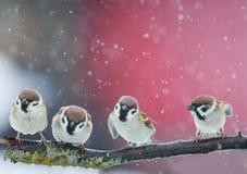 Het grappige vogels grappige debatteren in een Park tijdens een sneeuwval Royalty-vrije Stock Afbeelding