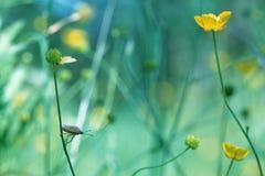 In het gras Royalty-vrije Stock Fotografie