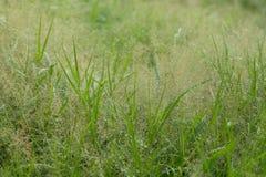 Het gras Stock Afbeelding