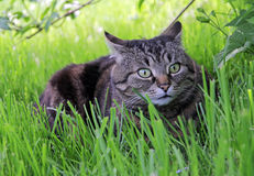 In het gras Stock Fotografie