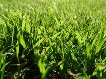 In het gras Royalty-vrije Stock Foto