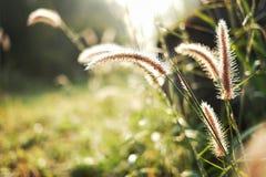 Het gras Stock Afbeeldingen